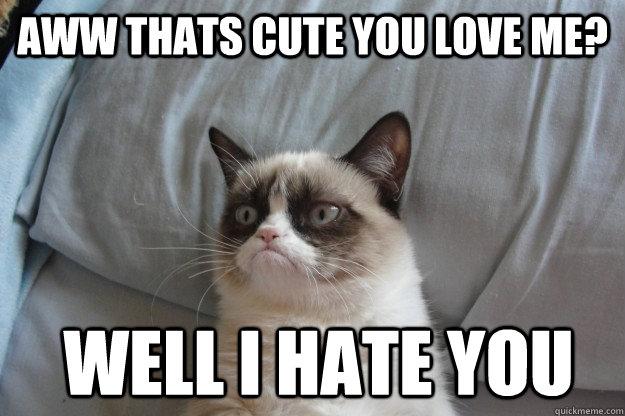 You love me? I hate you. Cat meme