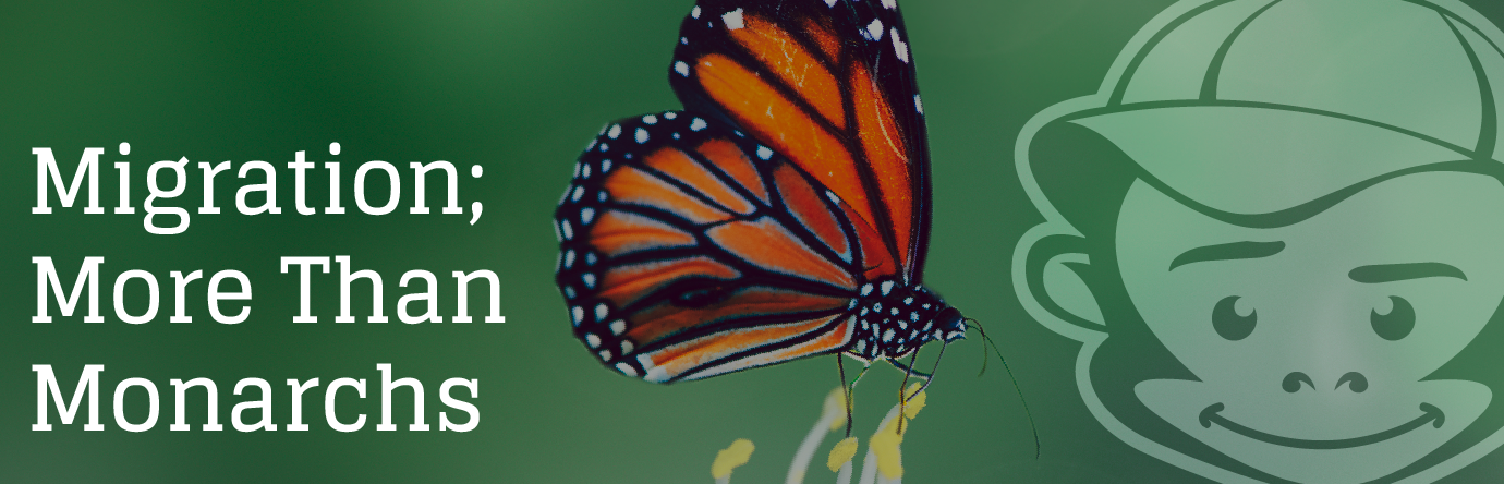 Migration; More Than Monarchs