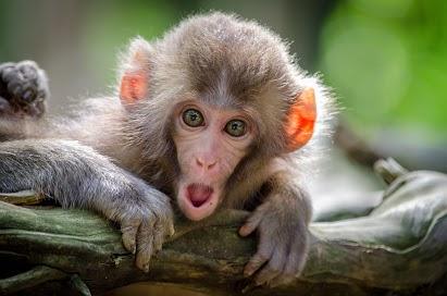 monkey-website